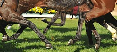 newmarket horse